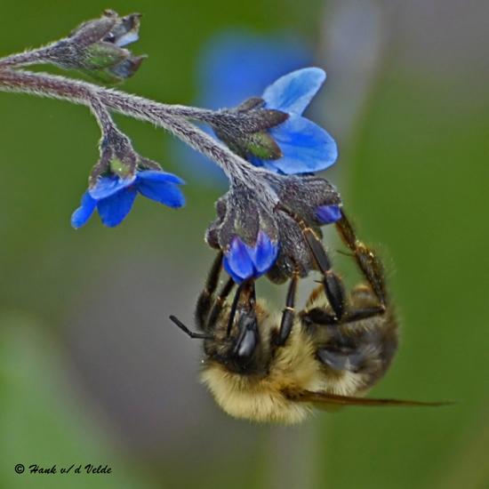 20080804- D200 175 Bee SERIES.jpg
