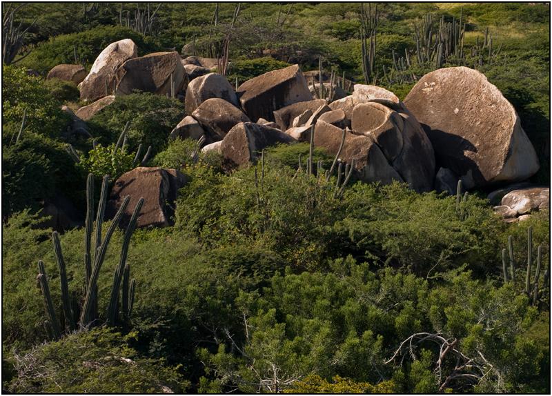 Cacti Amid the Casibari Boulders