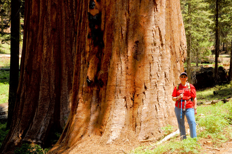 Glynda and two Giant Sequoias