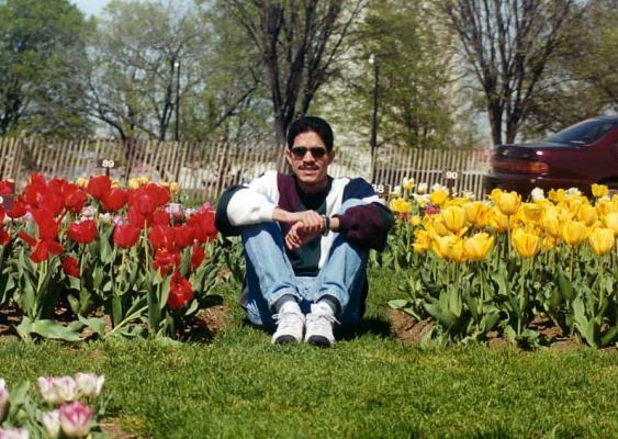 Rodeado de Tulipanes