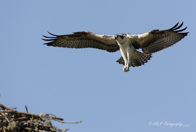 Osprey 4 pb.jpg