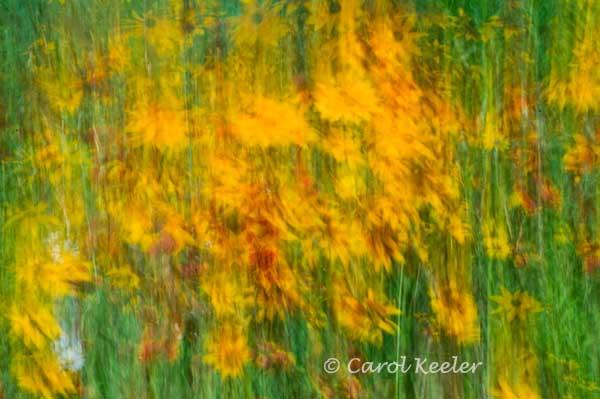 Wildflower Symphony