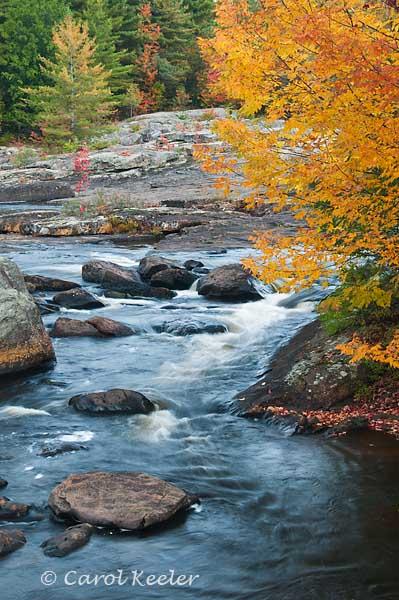 Black River in Forestport