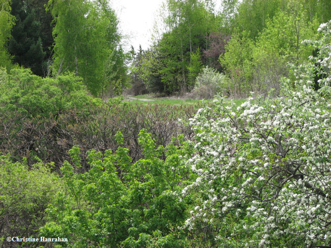 Looking across the Ravine in spring