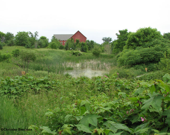 Look at the difference: The pond in early summer, June 2007