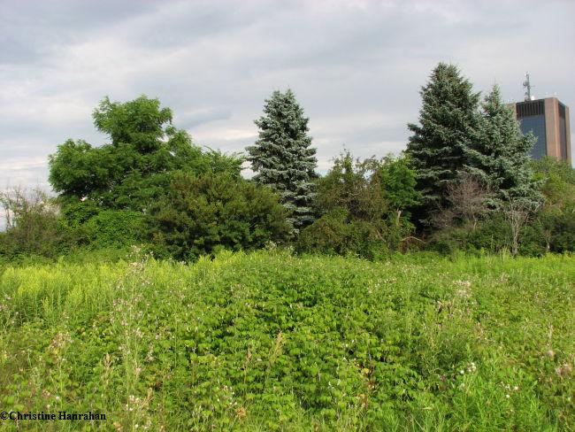 Old field in summer