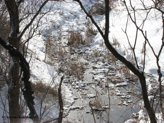 Ravine in winter