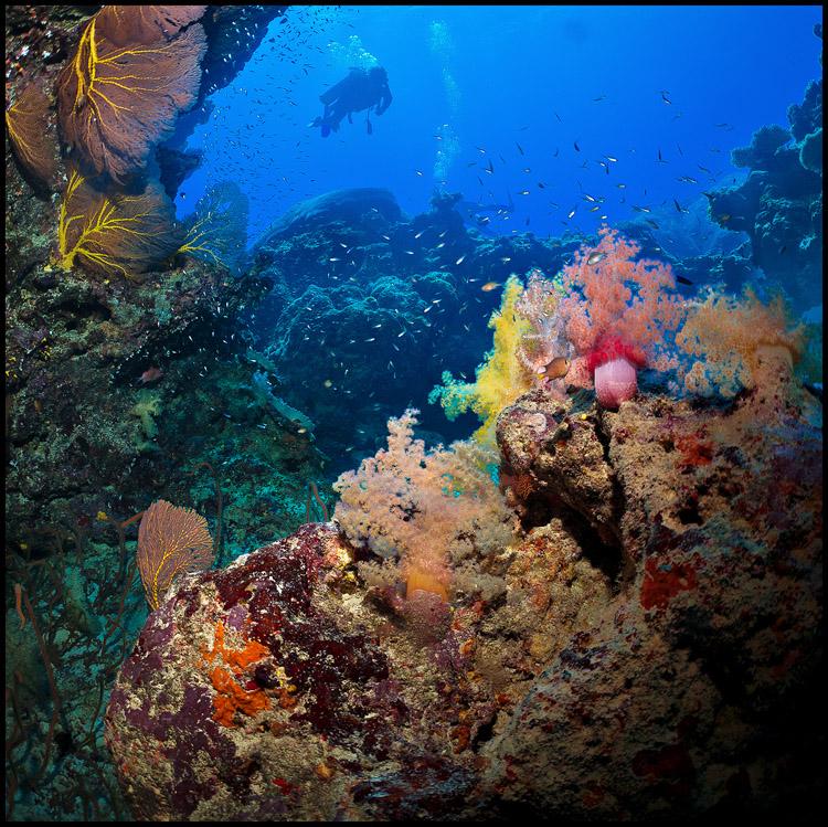 Coral scape Moso 2