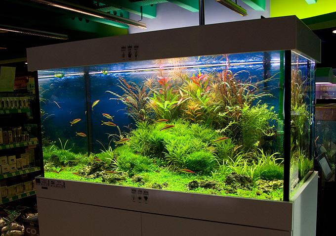 New 360 Liter Aquascape By Oliver Knott