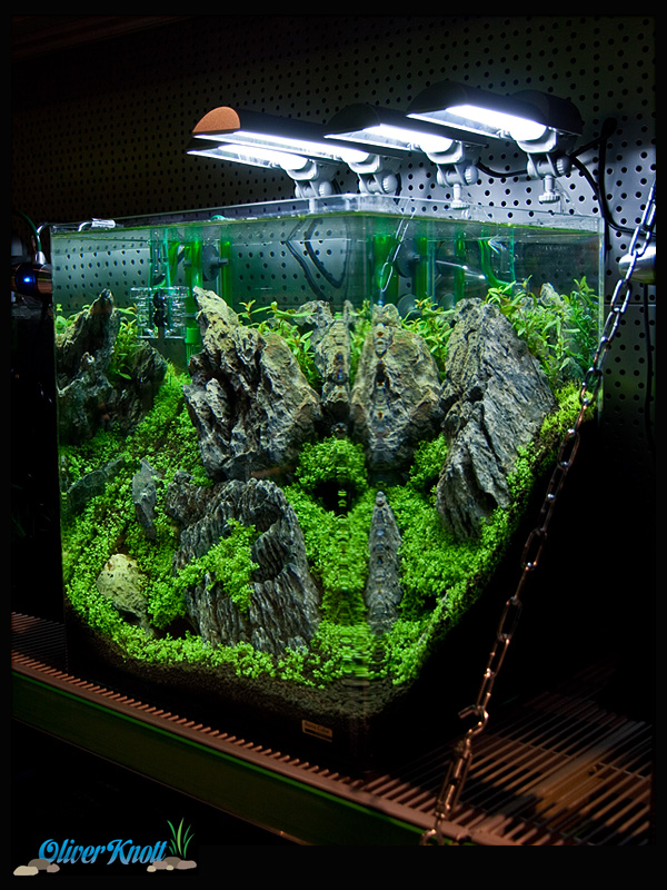 60 Liter Cube The Hobbit Theme Tank By Oliver Knott New Photo Oliver Martin Knott Photos At Pbase Com