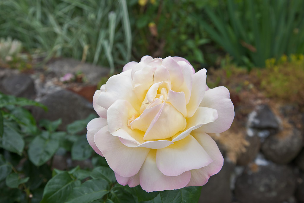 IMAGE: http://www.pbase.com/tonylong/image/135920351/original.jpg