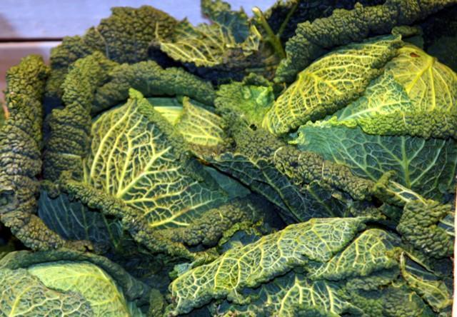 Wirsing / Savoy cabbage