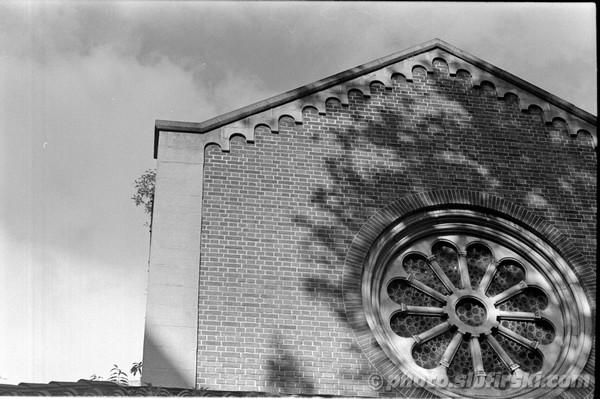 Black & White traditional (analog) photography - Minolta SR-T 100x