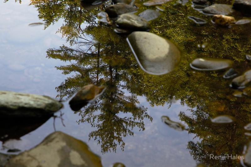 Wading Reflections #1