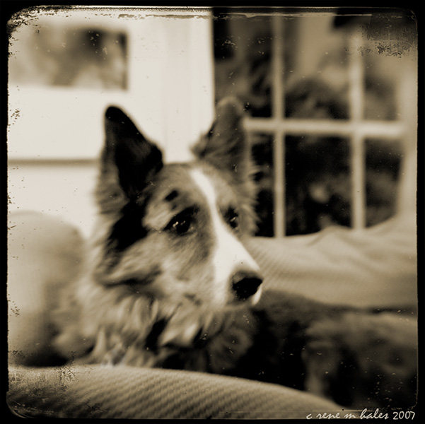 the roo dog