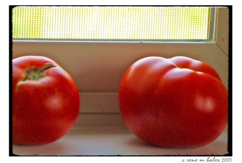 tomatoes on the sill