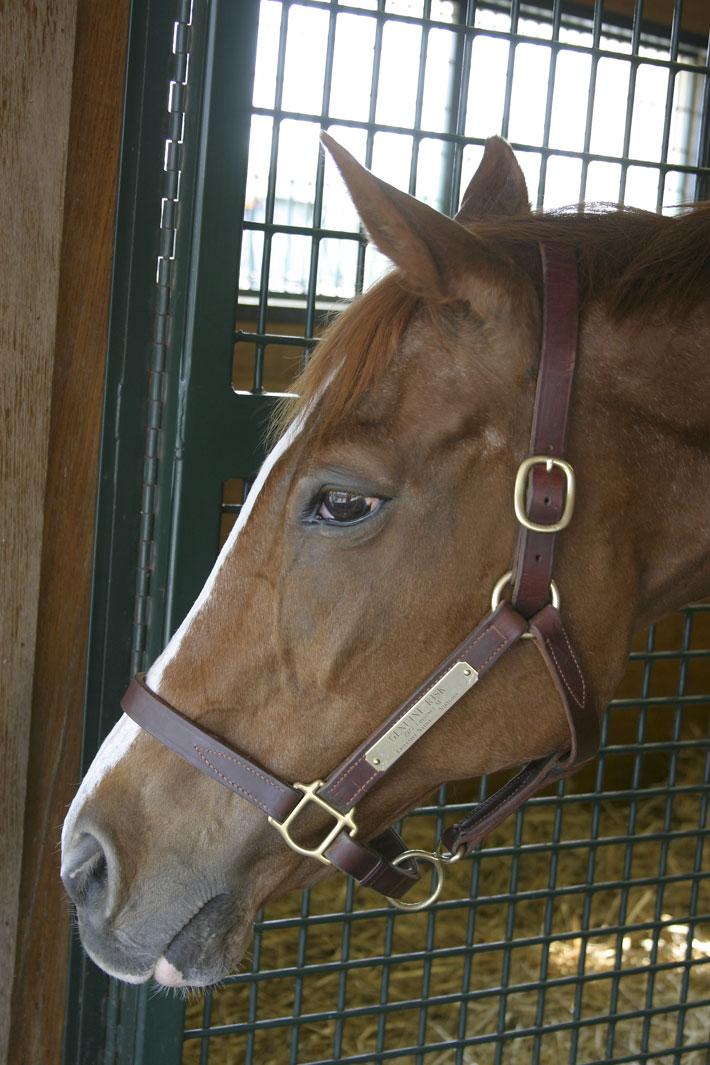 Genuine Risk.... Kentucky Derby Winner 1977-2008