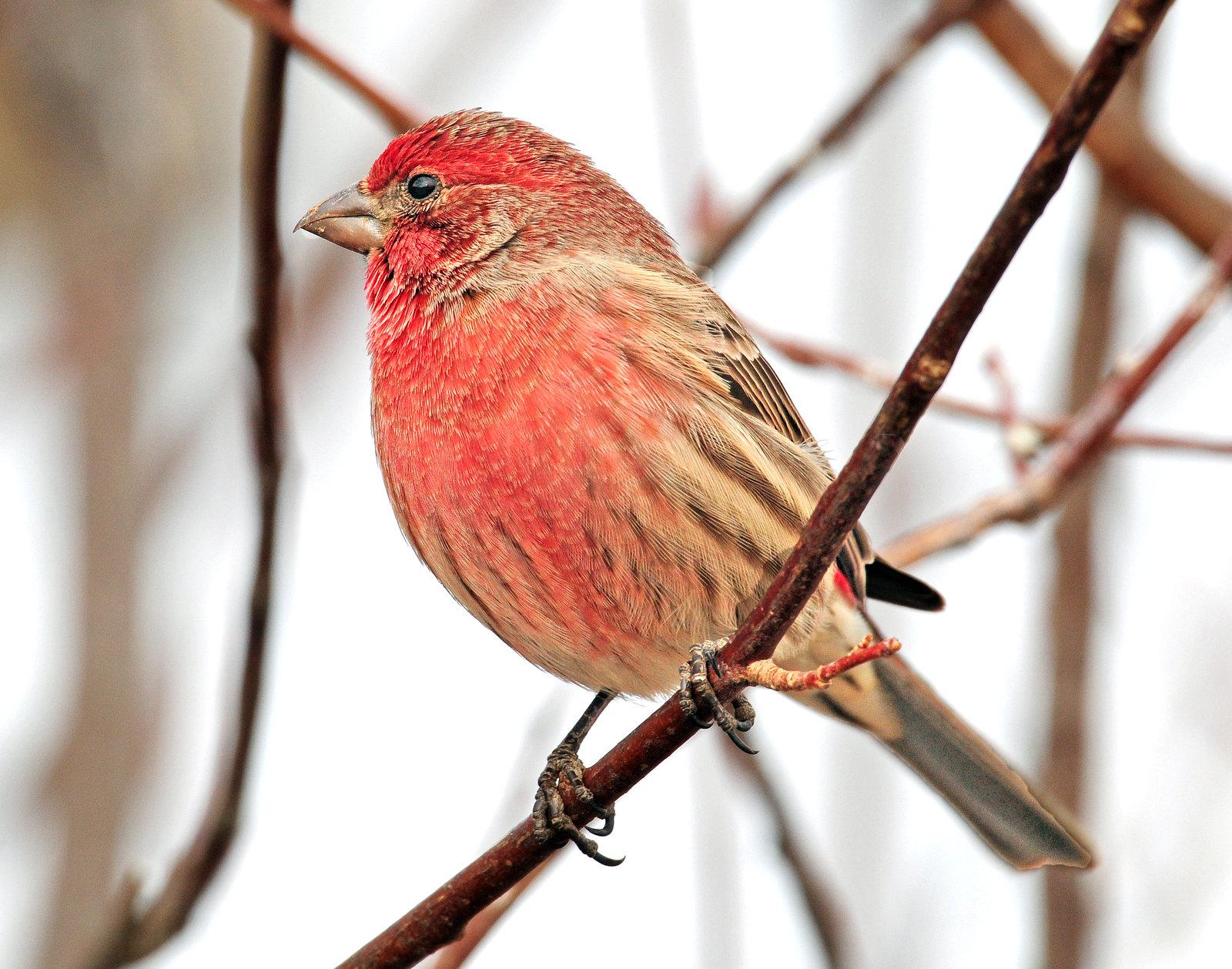 Finch, House