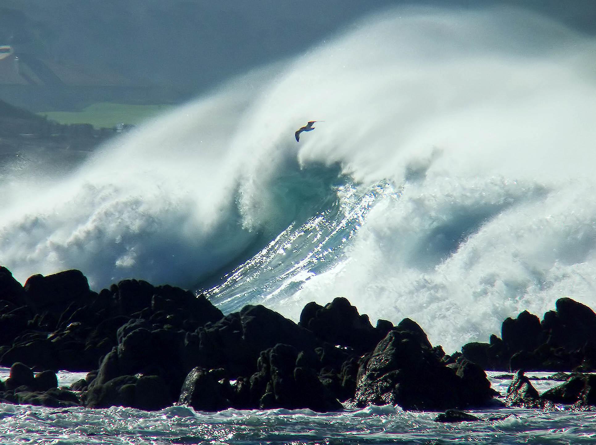 ex bird wave coast mod.jpg