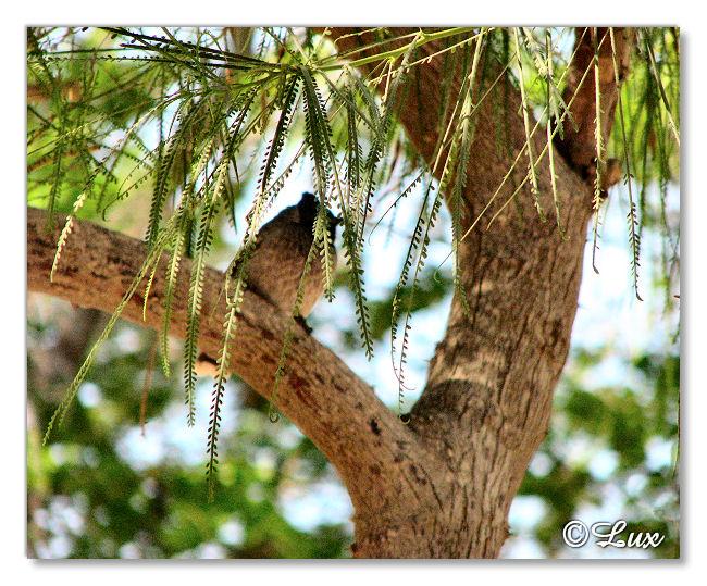 Tree Bird.JPG