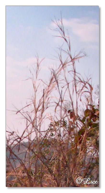 Dry Grass1.jpg