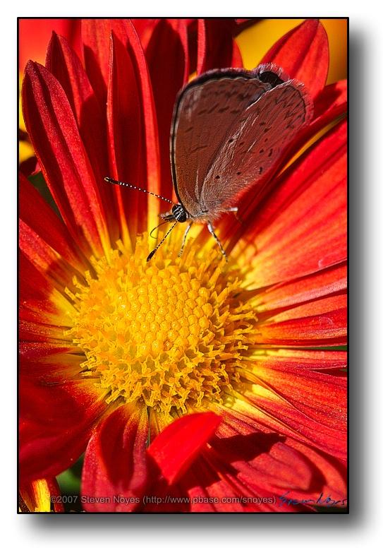 Smaller Butterflys