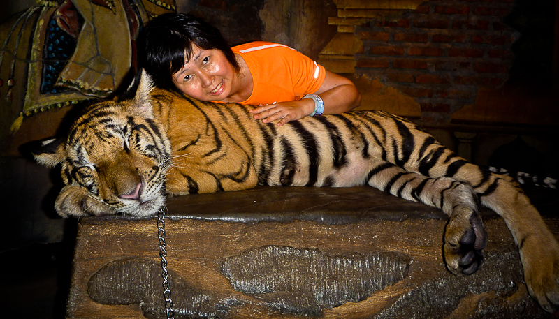 Gentle tiger