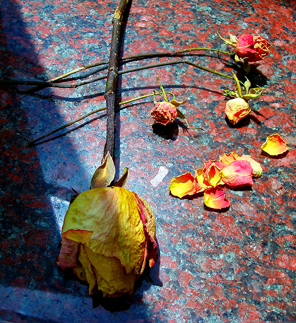rosy remnants.jpg