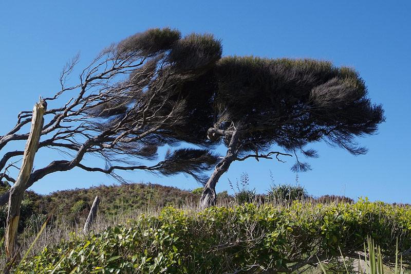 wind blown trees at QE Park