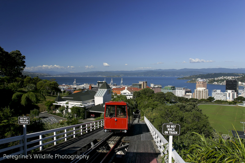 View above Wellington NZ from Kelburn. The funicular railway was built by my Gt- Gt Grandfather