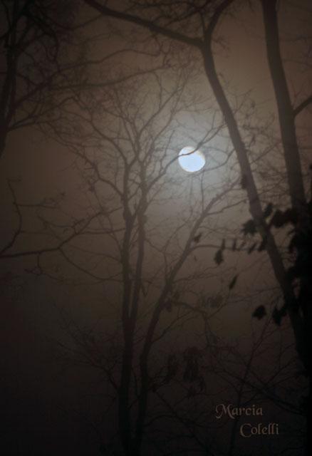 FOGGY NIGHT_0432.jpg