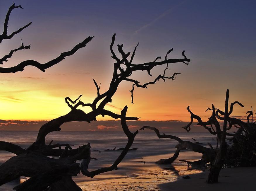 Dawn At Driftwood Beach Jekyll Island Georgia