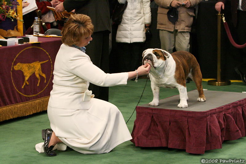 Angus at Westminster 2008