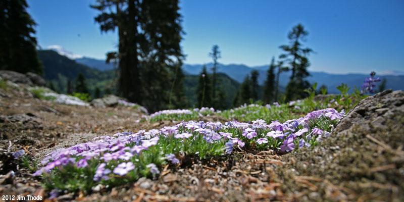 Overlook on #7 Trail - Mt Adams on left