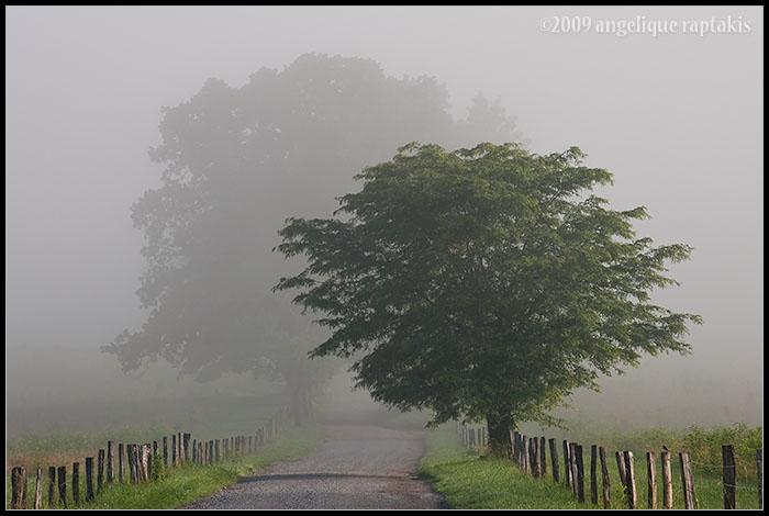_ADR9604 foggy lane wf.jpg