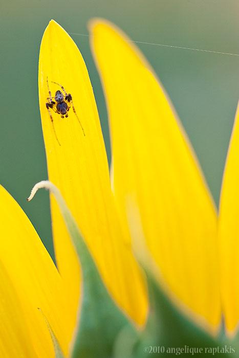 _ADR1250 spider w.jpg