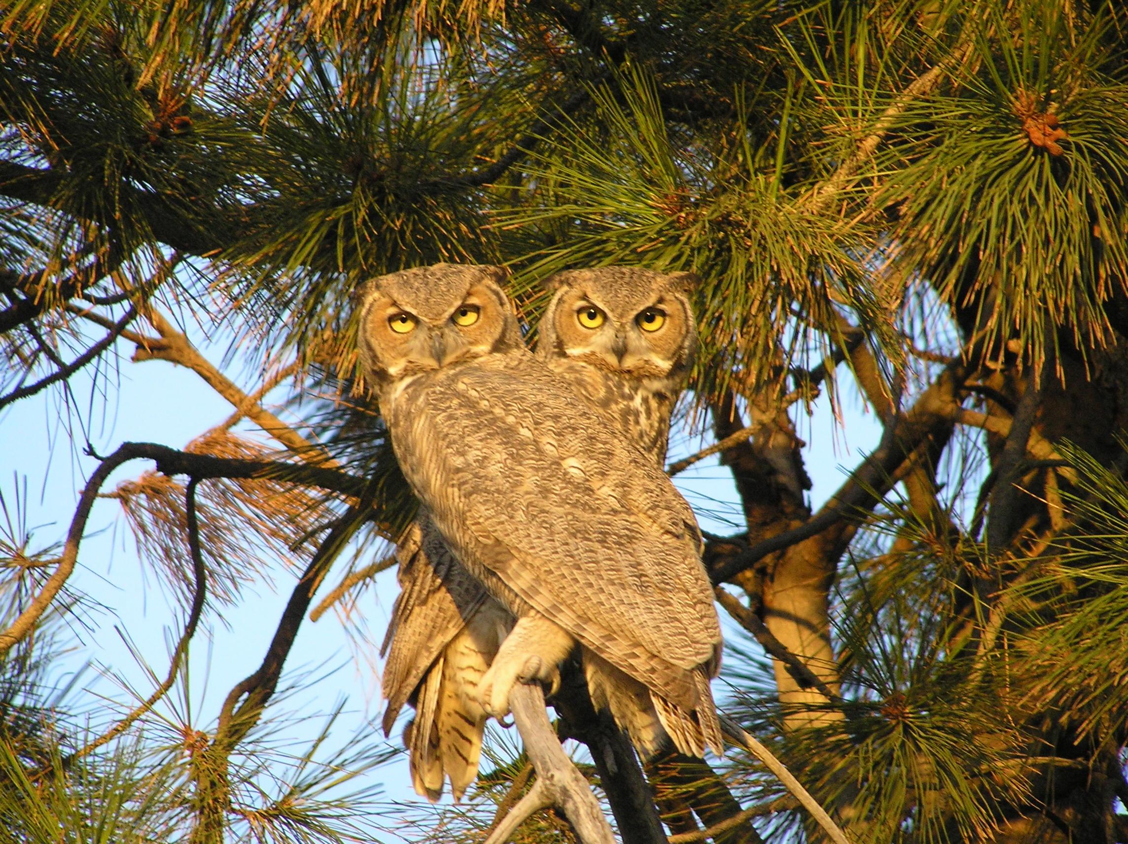 болели картинки две совы на дереве малыш сначала