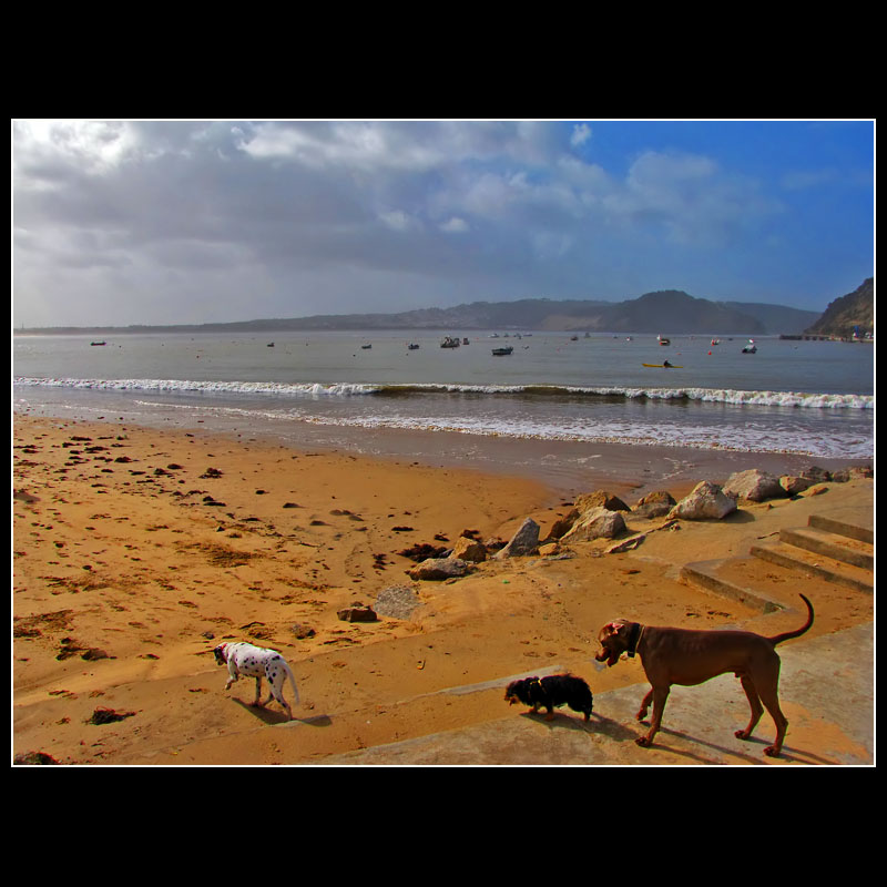 ... The dog`s also like to walk in the beach ... :)