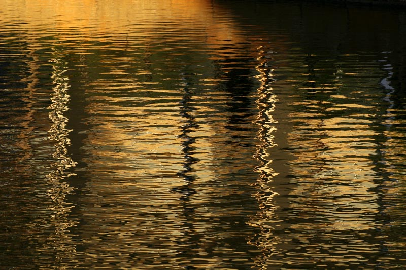 Reflections in a pond at twilight