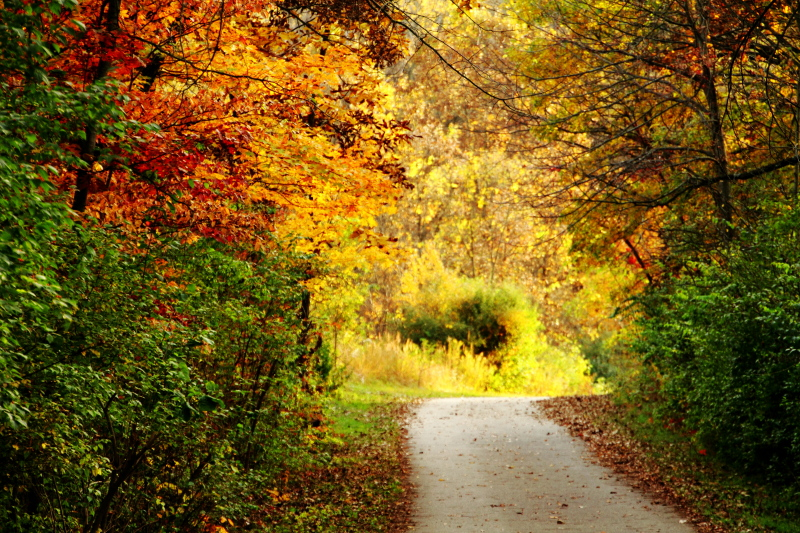 Rock Cut State Park, Illinois - Hiking Trail - Fall Colors photo ...