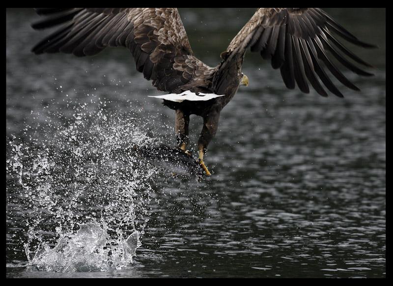Splash of the day.....