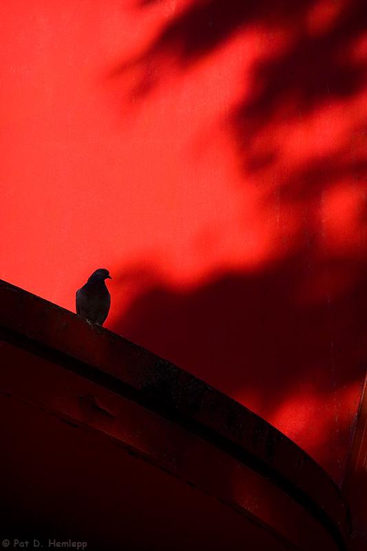Colorful perch