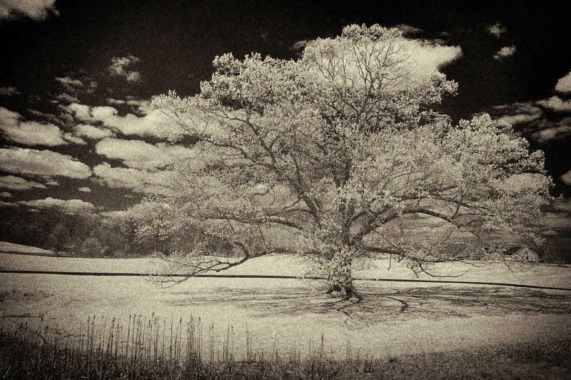 4/15/08 - IR Oak