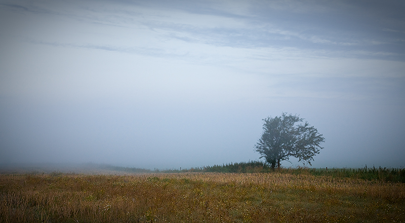 Solitary Tree in Fog