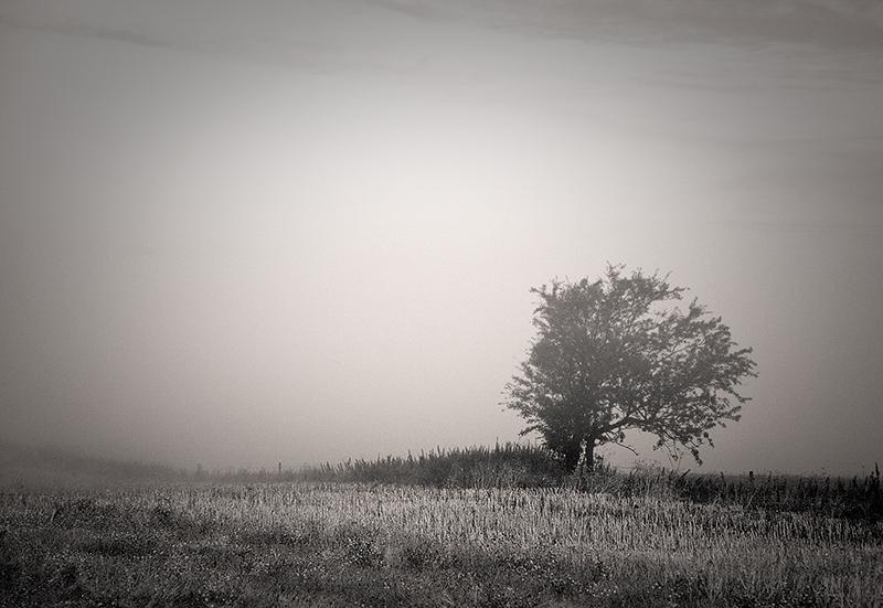 Duotone Tree in Fog