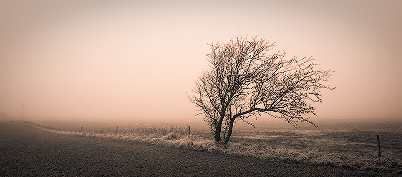 Tree in the Winter Mist - duotone