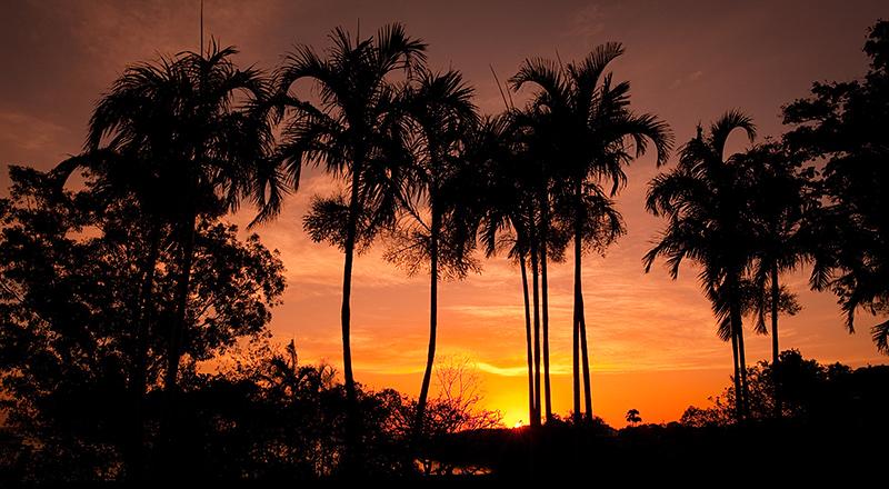 Palms in Bicentennial Park at sunset