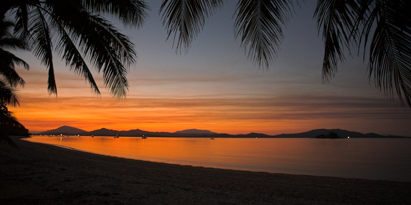 Dunk Island palm tree sunset #2