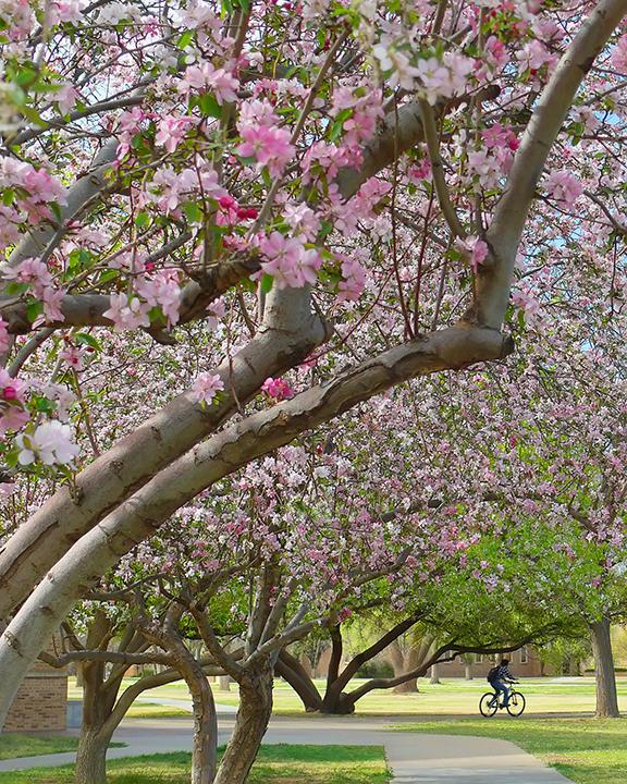 Gliding Into Spring
