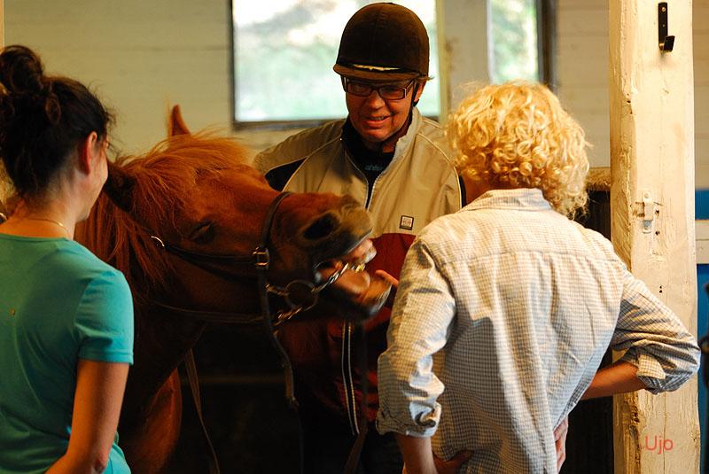 Alfs häst gäspade fem gånger varje gång den fick på sig tränselt. Så även idag.